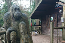 Go Ape Whinlatter, Braithwaite, United Kingdom