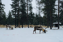 Joiku-Kotsamo Safaris, Saariselka, Finland