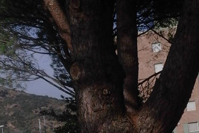 La Fiera di Mezzana Luna Park, Prato, Italy