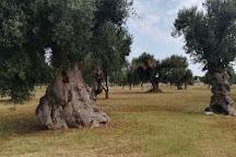 Discovery Quad, Carpignano Salentino, Italy