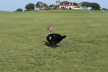 Tiger Point Golf Club, Gulf Breeze, United States