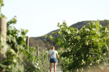 Baja Winery Tours, San Diego, United States