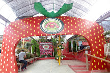 Big Red Strawberry Farm, Brinchang, Malaysia