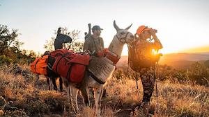 Backcountry Logistics - Pack Llamas
