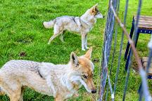 Tsitsikamma Wolf Sanctuary, Kenilworth, South Africa