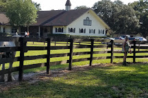 The Gypsy Gold Farm, Ocala, United States