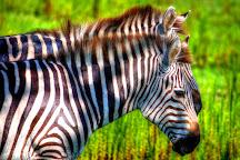 Safari Wilderness, Lakeland, United States