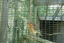 Ohio Bird Sanctuary, Mansfield, United States