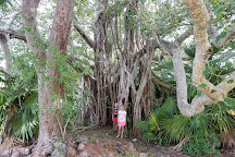 Lignumvitae Key Botanical State Park, Islamorada, United States