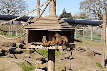 Yorkshire Wildlife Park, Doncaster, United Kingdom