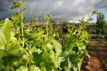 Espinosa Vineyards, Escondido, United States