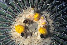 Palmex Cactus, El Paso, Spain