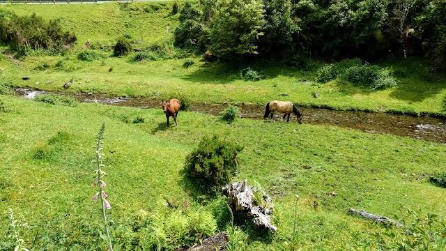 Parc national de Te Urewera