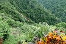 Pura Vida Gardens and Waterfalls