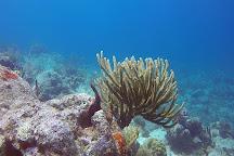 St-Barth Plongee - Birdy Dive Center, Gustavia, St. Barthelemy