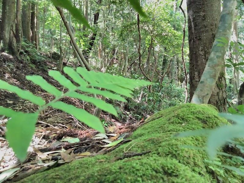 国指定天然記念物「双石山の自然林」