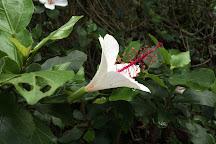 Amy B.H. Greenwell Ethnobotanical Garden, Captain Cook, United States