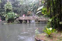 Bosque Rodrigues Alves - Jardim Botanico da Amazonia, Belem, Brazil