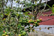 Sandra Farms Coffee, Adjuntas, Puerto Rico