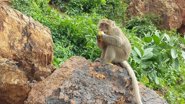 Monkey Island Koh Larn