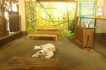 Zoobic Safari, Subic Bay Freeport Zone, Philippines
