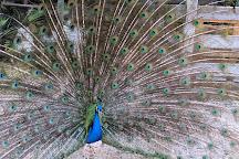 Parco Faunistico di Spormaggiore, Spormaggiore, Italy