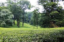 Palampur Tea Gardens, Palampur, India