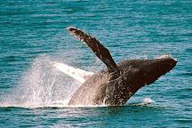 Condor Express Whale Watching, Santa Barbara, United States