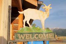 Jumpin' Good Goat Dairy, Buena Vista, United States