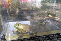 Jurong Frog Farm, Singapore, Singapore