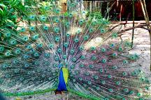 Thiruvananthapuram Zoo, Thiruvananthapuram (Trivandrum), India