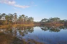 Long Pine Key, Everglades National Park, United States