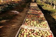 Jenkins Lueken Orchards, New Paltz, United States