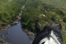 Feeneys Riding Stables, Bushypark, Ireland