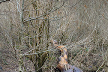 Drumboe Woods, Stranorlar, Ireland