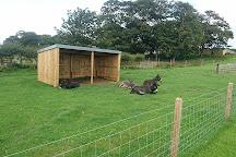 Playdale Farm Park, Cayton, United Kingdom