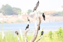 Randarda Lake, Rajkot, India