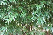 Jungle In Willunga, Willunga, Australia