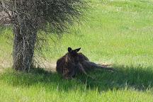 Kangaroo Island Hire a Guide, Kangaroo Island, Australia