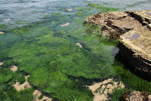 Beach Cove Belmore Basin, Wollongong, Australia