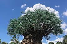 Disney's Animal Kingdom, Orlando, United States