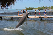 Dolphin Research Center, Grassy Key, United States