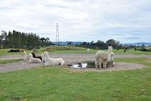 Agrodome, Ngongotaha, New Zealand