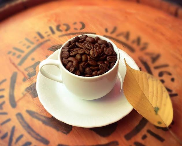 コーヒーロースト黒柴