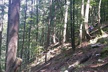 Pokljuka Gorge, Krnica, Slovenia