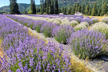 Lavender Valley, Hood River, United States