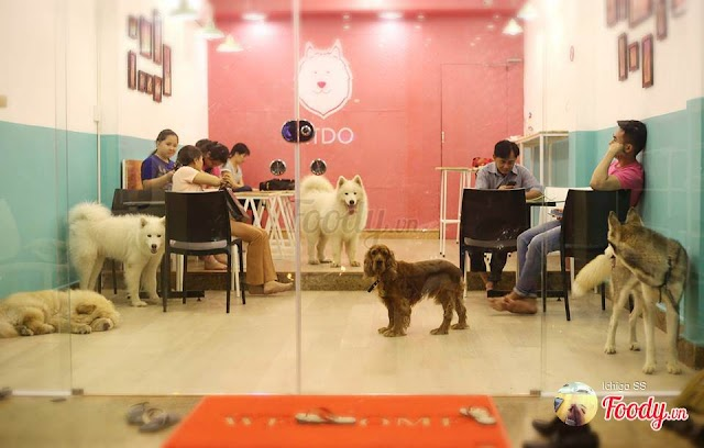 Ritdo Pet Coffee & Spa