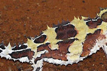 Alice Springs Reptile Centre, Alice Springs, Australia