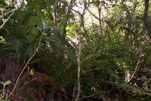 Gruta de los Helechos, Tacuarembo, Uruguay