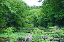 Wasabi Fields of Ikadaba, Izu, Japan